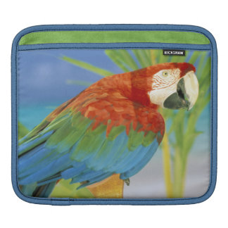 USA, Hawaii. Parrot iPad Sleeve