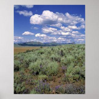 USA, Idaho, Camas Co. Sagebrush and lupine Poster