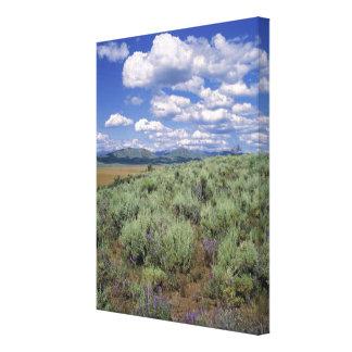 USA, Idaho, Camas Co. Sagebrush and lupine Stretched Canvas Print