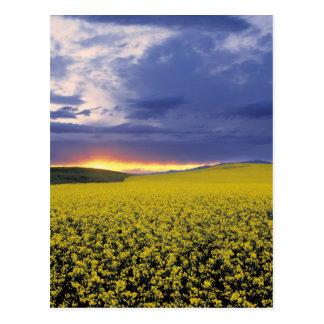 USA, Idaho, Swan Valley. A fiery sunset erupts Postcard