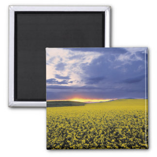 USA, Idaho, Swan Valley. A fiery sunset erupts Square Magnet