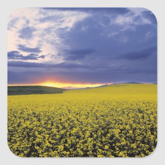 USA, Idaho, Swan Valley. A fiery sunset erupts Square Sticker