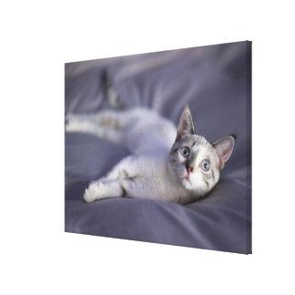 USA, Iowa, Portrait of young kitten 2 Canvas Print