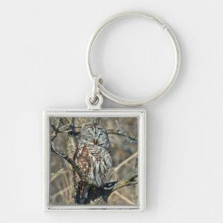 USA, Kansas. Barred Owl (Strix Varia) Silver-Colored Square Key Ring