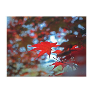 USA, Kansas. Fall Colors Gallery Wrapped Canvas
