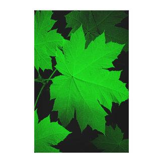 USA, Kansas, Oak Leaves In The Light Canvas Print