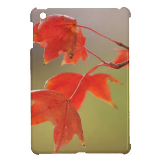 USA, Kansas, Red Leaves In Early Fall iPad Mini Covers