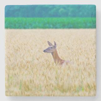USA, Kansas, White Tail Doe Crossing Wheat Stone Beverage Coaster