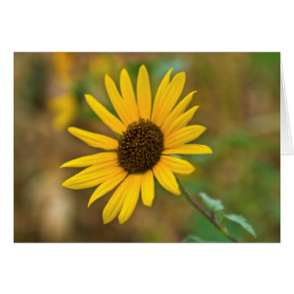 USA, Kansas. Wild Sunflower Card