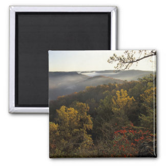 USA, Kentucky. Daniel Boone National Forest. Square Magnet
