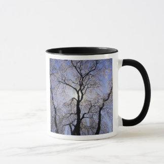 USA, Kentucky, Lexington. Backlit tree and Mug