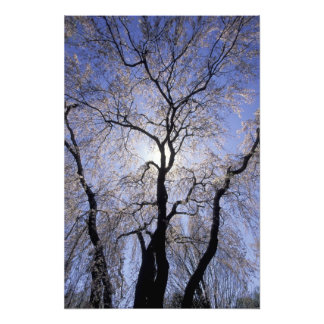 USA, Kentucky, Lexington. Backlit tree and Photo Art