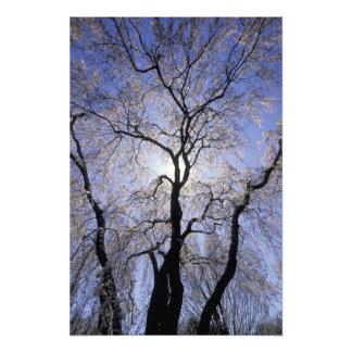 USA, Kentucky, Lexington. Backlit tree and Photographic Print
