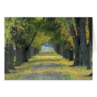 USA, Kentucky, Louisville. Tree-lined road in Card