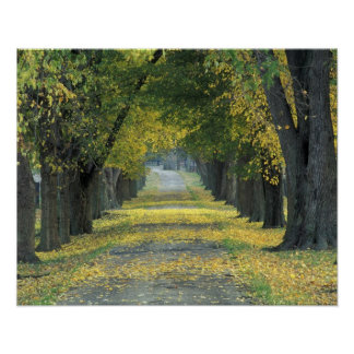 USA, Kentucky, Louisville. Tree-lined road in Poster
