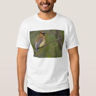 USA, Lake Sammamish, Washington. Cedar Waxwing Shirt