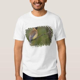 USA, Lake Sammamish, Washington. Cedar Waxwing T-shirts
