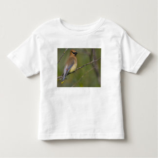 USA, Lake Sammamish, Washington. Cedar Waxwing Tshirts