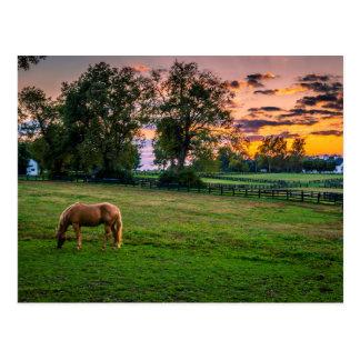USA, Lexington, Kentucky. Lone horse at sunset 2 Postcard