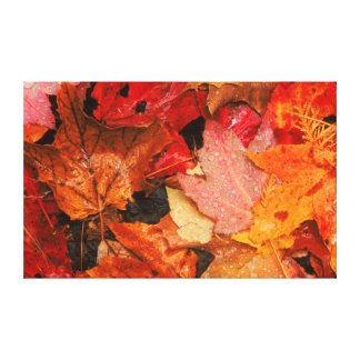 USA, Maine. Autumn maple leaves Gallery Wrapped Canvas