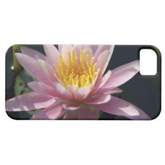 USA, Massachusetts, Great Barrington, lily pad Case For The iPhone 5