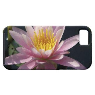 USA, Massachusetts, Great Barrington, lily pad iPhone 5 Cases