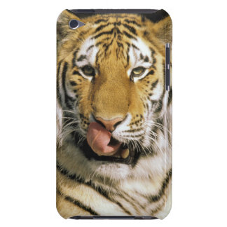 USA, Michigan, Detroit. Detroit Zoo, tiger Barely There iPod Cases
