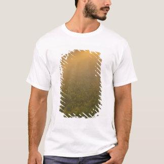 USA, Michigan, Meadow of goldenrod plants T-Shirt