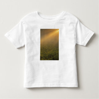 USA, Michigan, Meadow of goldenrod plants Toddler T-Shirt