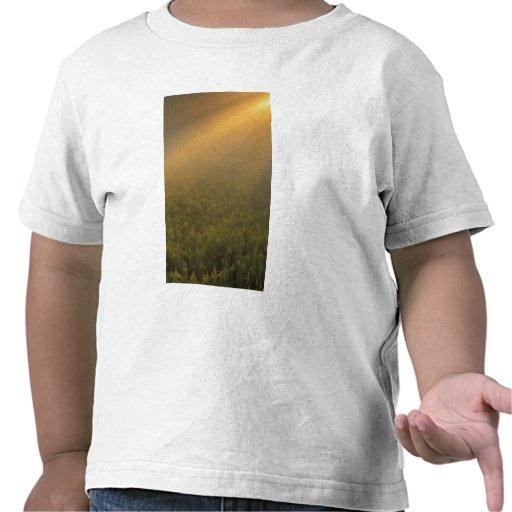 USA, Michigan, Meadow of goldenrod plants T-shirts