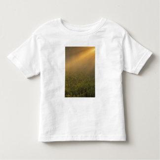 USA, Michigan, Meadow of goldenrod plants Tshirts
