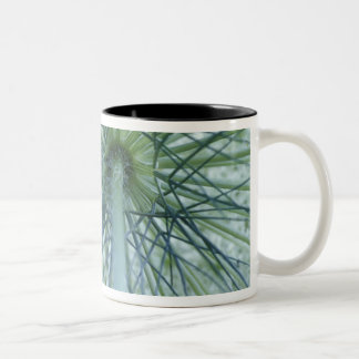 USA, Michigan. Queen-Anne's Lace viewed from Two-Tone Mug