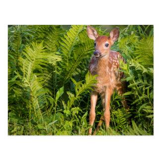 USA, Minnesota, Sandstone, Minnesota Wildlife 10 Postcard