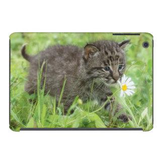 USA, Minnesota, Sandstone, Minnesota Wildlife 19 iPad Mini Covers