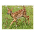 USA, Minnesota, Sandstone, Minnesota Wildlife 20 Postcard