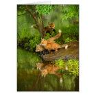 USA, Minnesota, Sandstone, Minnesota Wildlife 7 Card
