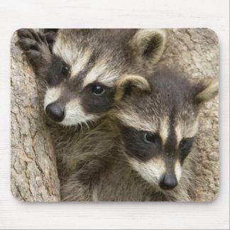 USA, Minnesota, Sandstone, Minnesota Wildlife 7 Mouse Pad