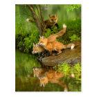 USA, Minnesota, Sandstone, Minnesota Wildlife 7 Postcard