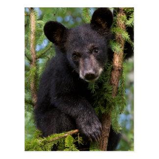 USA, Minnesota, Sandstone, Minnesota Wildlife 8 Postcard