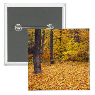USA, Missouri, Boone County, Maple Forest in 15 Cm Square Badge