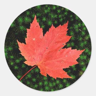 USA, Missouri, Mark Twain National Forest Round Sticker