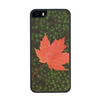 USA, Missouri, Mark Twain National Forest Wood iPhone SE/5/5s Case