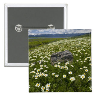 USA, Montana, Wild Daisy blooming in meadow by 15 Cm Square Badge