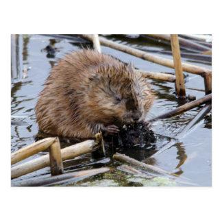 USA, Nebraska. Beaver Postcard