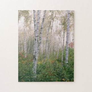 USA, New Hampshire. Birch trees in clearing fog Jigsaw Puzzle
