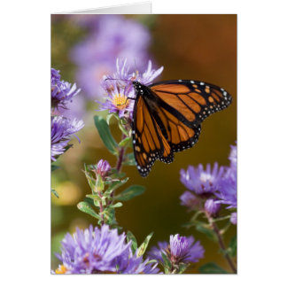 USA, New Hampshire. Monarch butterfly on aster Greeting Card