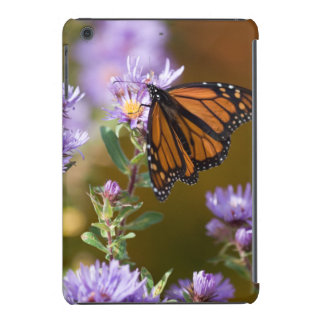 USA, New Hampshire. Monarch butterfly on aster iPad Mini Cases