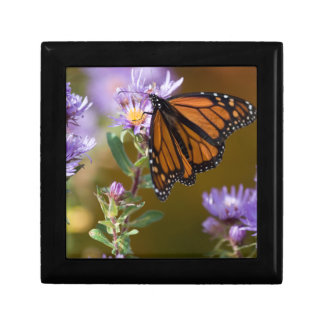 USA, New Hampshire. Monarch butterfly on aster Small Square Gift Box