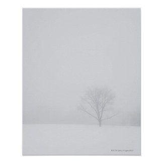 USA, New Jersey, Lonely tree in winter scenery Poster