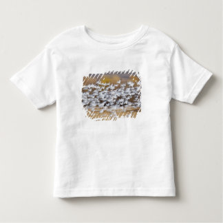 USA, New Mexico, Bosque del Apache National 3 Toddler T-Shirt